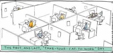 Cats at work 1