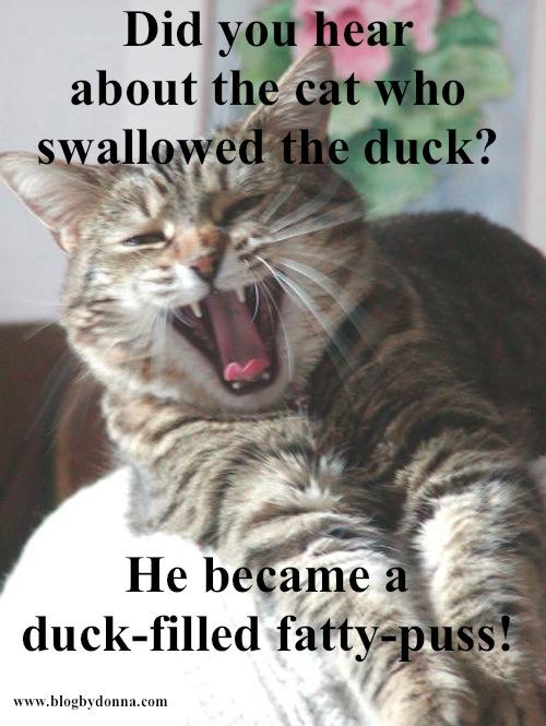cat-joke-1.jpg