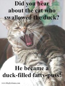 Cat Joke 1