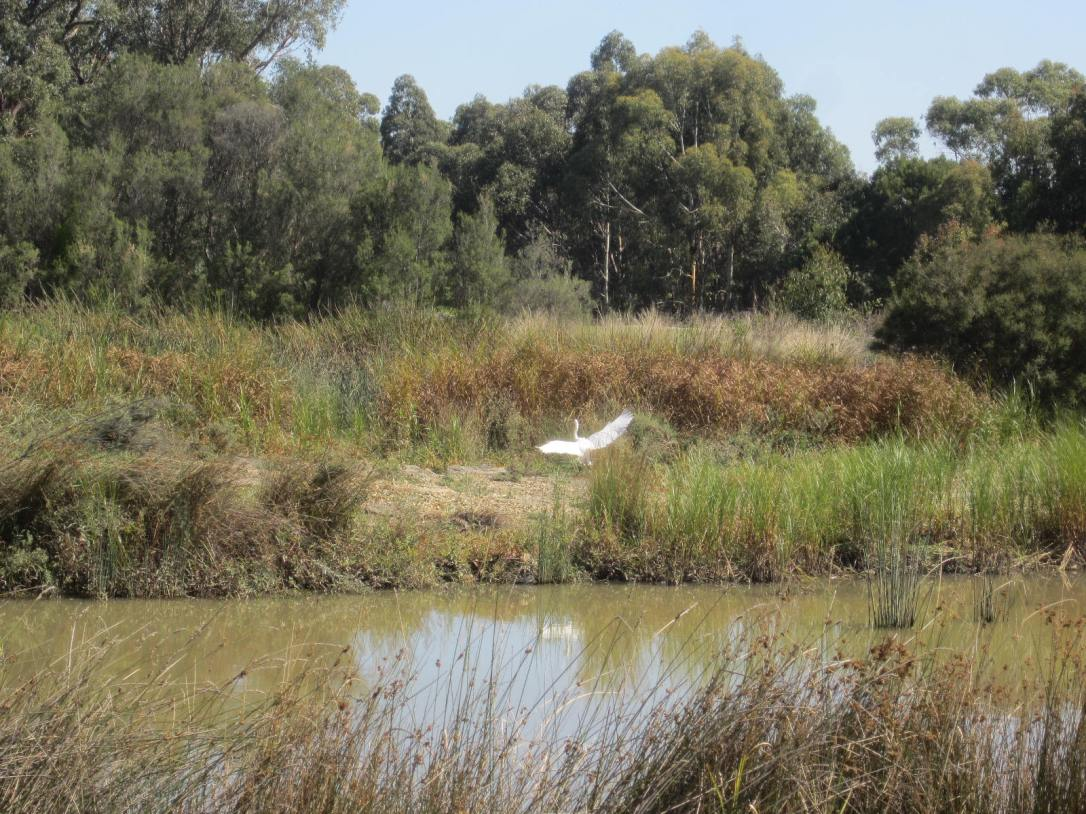 Park heron