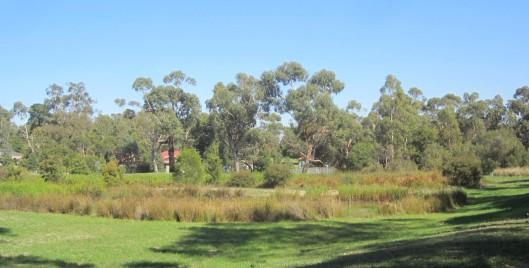 Park wetlands