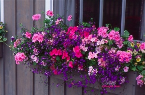 8 window-boxes
