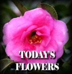 Todays Flowers Denise