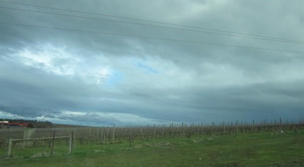 Vineyard sky