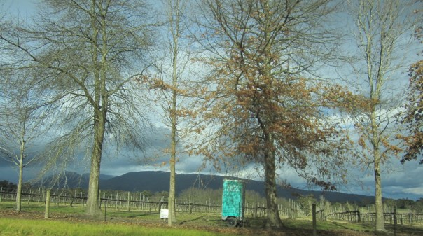Vineyard trees