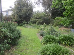 A garden coloured green
