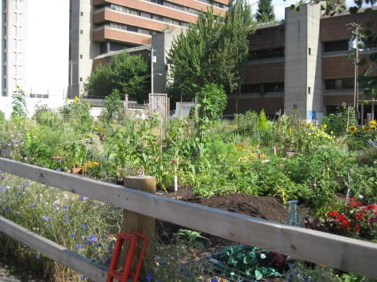 Community Garden ~ Cnr Burrard & Davies ~ Vancouver 2010