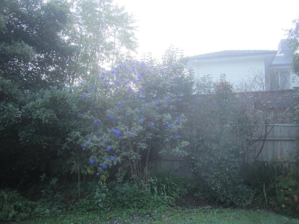 Foggy morning back