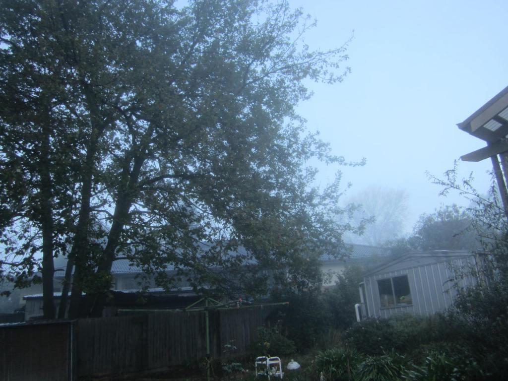 Foggy morning side