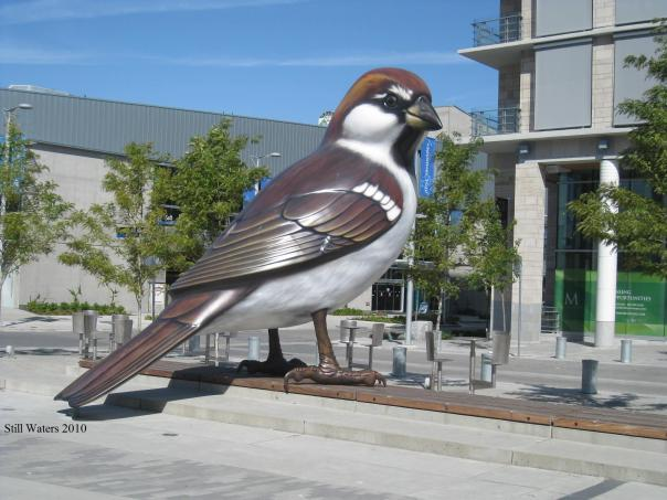 Big Birds Vancouver 2010