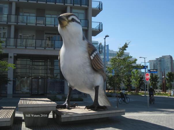 Bird Vancouver 2010