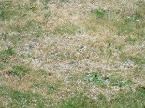hail grass