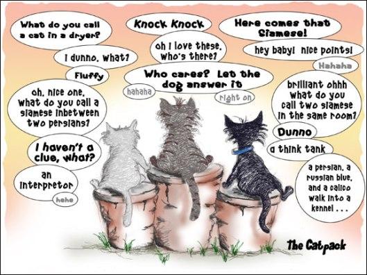 Cat Joke 2